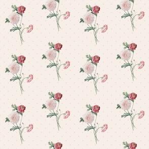 Delicate pink ranunculus