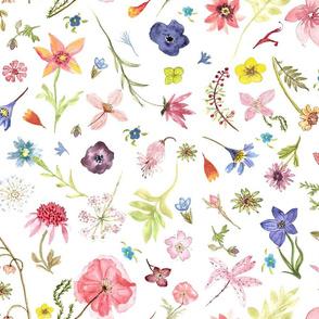 Hand Drawn watercolor Native Florals
