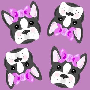 Girly Boston Terrier