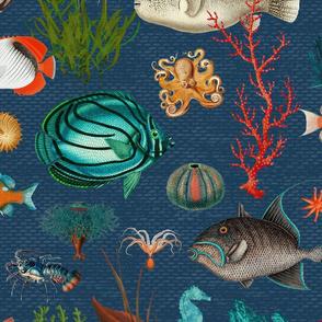 Oceania in marine blue