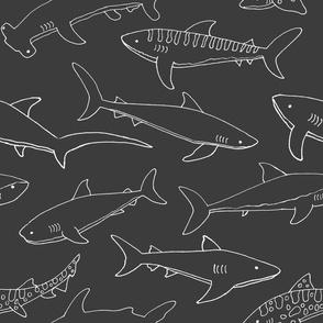 Types of Sharks - Grey