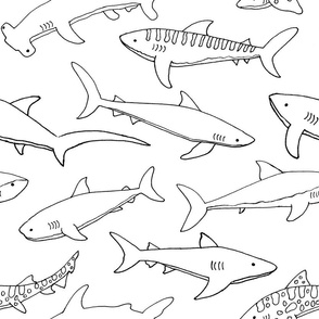 Types of Sharks - Black and White