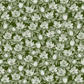 Eranthis green oneway