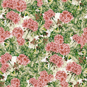 Pink Geranium (White)