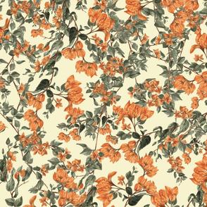 Orange Bougainvillea (Cream)