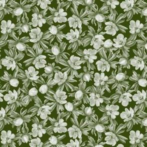 Eranthis green multi