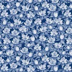 Eranthis blue oneway