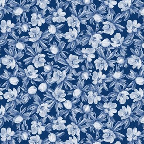 Eranthis blue multi