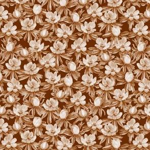 Eranthis brown oneway