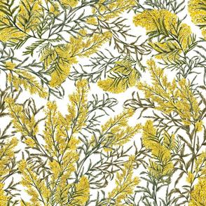 Acacia/Mimosa (White)