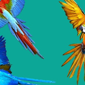 Macaws in Teal