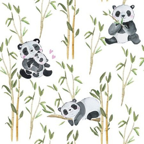 Panda love with bamboo on white