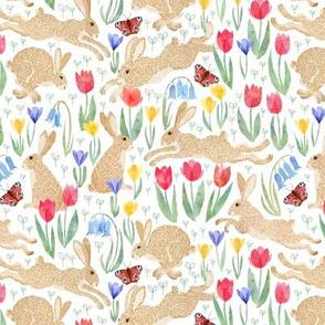Smaller - Spring meadow hares