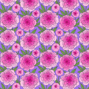 magenta pink peony line drawing floral on violet