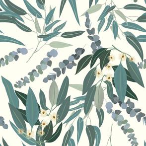 Eucalyptus  - light - large