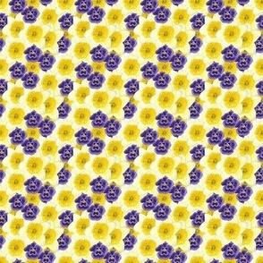 Daffodil Iris Spring Flower Explosion!