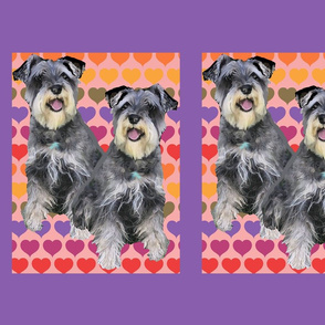 large schnauzers and hearts