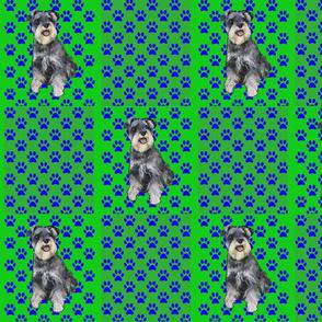 green schnauzer and pawprints