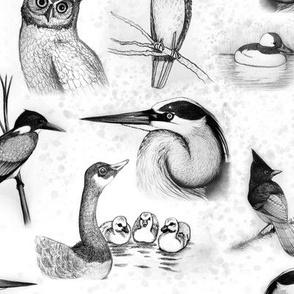 new birds repeat black