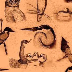 new birds repeat vivid black and burnt orange