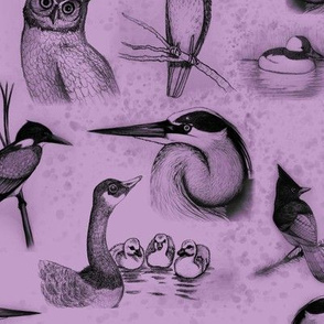 new birds repeat purple