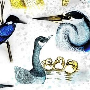 natural birds blue yellow hand drawn