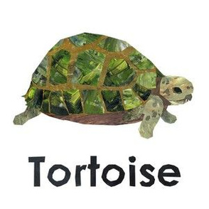"Tortoise - 6"" panel"