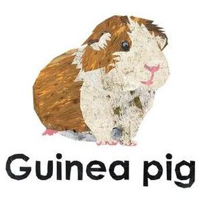 "Guinea pig - 6"" panel"