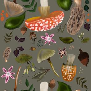Woodlands mushrooms acorns