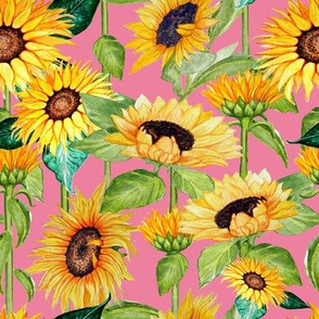 sunflowers on stalks candy pink