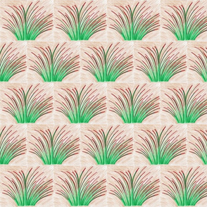 Rubra Grass