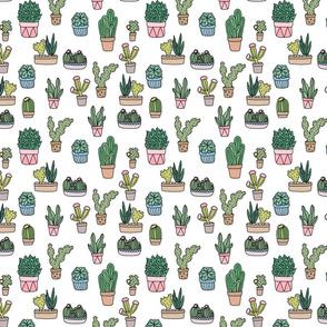 Succulents (white)