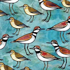 Shorebirds on turquoise