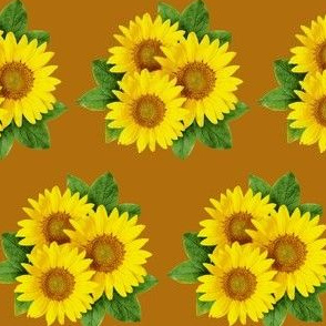 large sunflowers with brown background