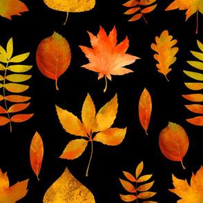 Fall leaves on black