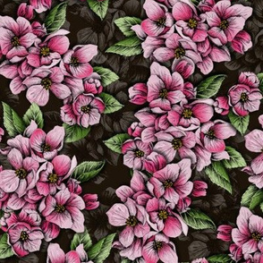 Pink Crabapple Blossoms for Spring