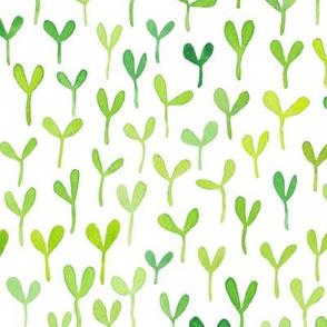 Watercolour seedlings on white