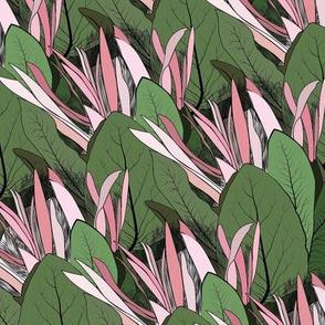 Protea dreams flower