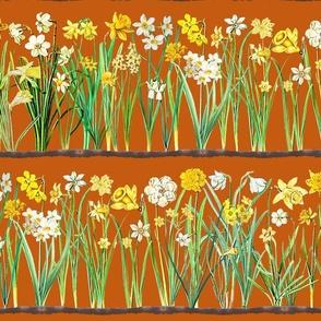 Autumn brown daffodil border