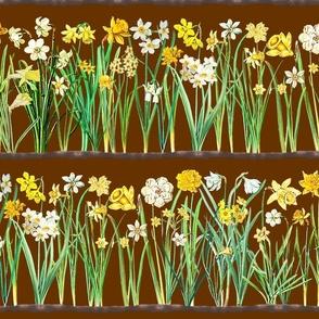 Brown daffodil border