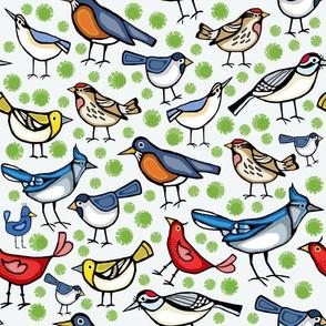 Backyard birds on white
