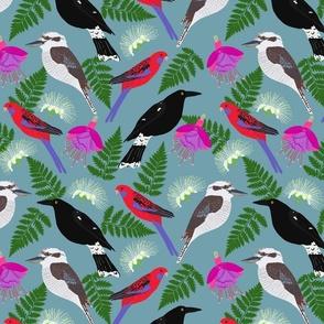 Australian Birds from my window