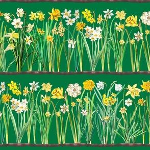 Green daffodil border