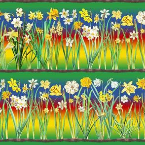Rainbow daffodil border