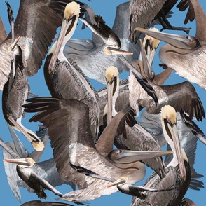 Pelican Paradise-Blue