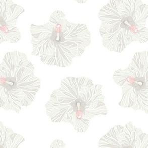 White Hibiscus on White Background