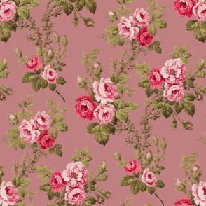 Old English Roses on Old Rose Pink