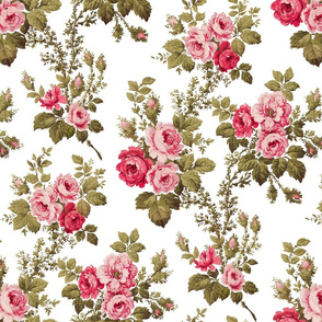 Old English Pink Roses on White