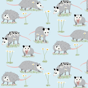 Opossums and Daisies