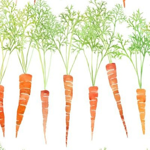 watercolor carrots in rows on white
